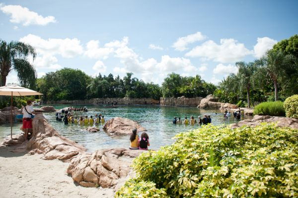 Discovery Cove, Sea World, Florida, Orlando, Dolphins, Swim, Park, Beach, Lazy, River, Relaxed, Scenery, Landscape, Swimming, Experience, Dolphin Swim, Ocean, Pool, lagoon